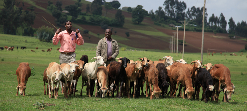 Livestock disease diagnosis tools for Sub-Saharan Africa: a guide to what's out there
